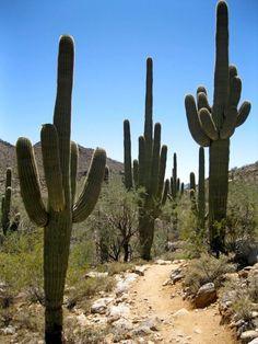 Arizona....