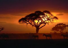 Serengeti Sunset by Peter Emery