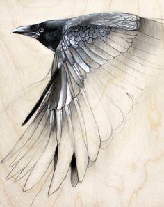 raven study art drawing small art print. $15.00, via Etsy.