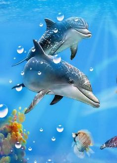 Metal Poster Dolphins