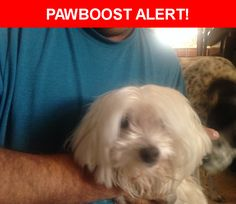Is this your lost pet? Found in Albuquerque, NM 87114. Please spread the word so we can find the owner!  Description: Older Female Maltese.  No tags, no chip. Very friendly and loving. Her tongue sticks out to the left when she licks. She was very skinny and hungry when we found her.   Nearest Address: Irving and Universe NW