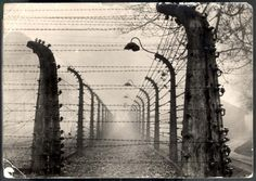 Auschwitz, Poland, The camp fence. People must remember for history to not be repeated
