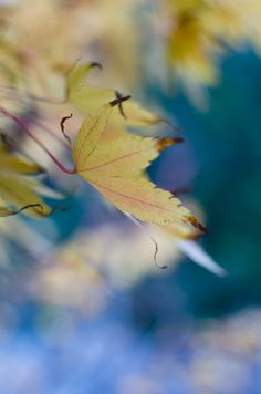 © 2012 Viviane Perenyi Fall Foliage
