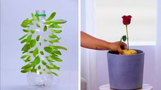 More Than 44 We're Rooting For These Clever Plant Hacks Diy Gardening And , We're Rooting for These 12 Clever Plant Hacks! Diy Gardening, Container Gardening, Hydroponic Gardening, Diy Hacks, Comment Planter Des Roses, Self Watering Plants, Decoration Plante, Planting Roses, Garden Care