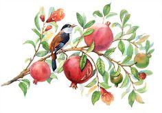 Watercolor bird on a pomegranate branch Watercolor Sketch, Watercolor Bird, Watercolor Illustration, Watercolor Paintings, Pomegranate Art, Fruit Art, Bird Art, Botanical Prints, Vintage Flowers
