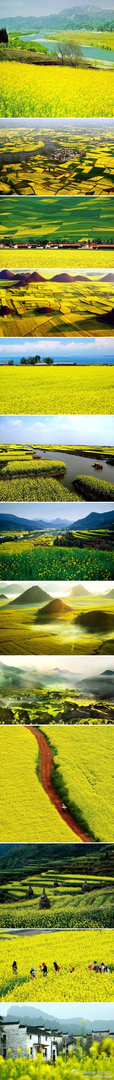 terraced fields in China Luscious lime