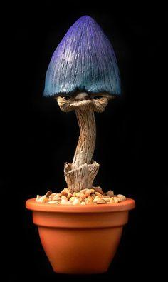 new species of mushroom