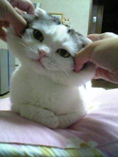 Smile :) - #cat
