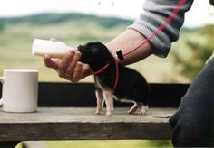 miniature teacup piglet....so cute!