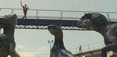 Raptor Ranger rounding up the pack