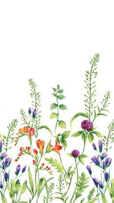 Line Art Flowers, Flower Art Images, Flower Background Wallpaper, Flower Backgrounds, Plant Illustration, Botanical Illustration, Botanical Flowers, Botanical Prints, Watercolor Flowers