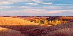 Autumn cottonwoods in the Kansas Flint Hills