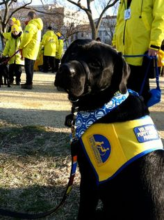 Canine Companions for Independence @ DC today :)