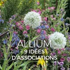 Thalictrum, Pigamon : plantation, culture et association Permaculture, Garden Online, Plants, Garden, Geraniums, Zen Garden, Allium, Planting Herbs, Container Gardening