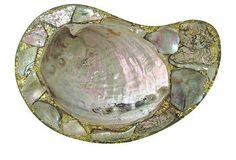 inlaid polished abalone shell
