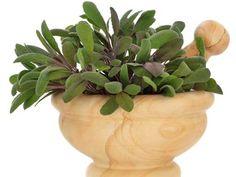 liečivé šalvivové bonbony Homemade, Plants, Medicine, Diet, Hand Made, Planters, Medical, Diy, Plant