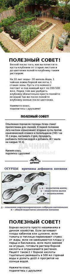 Популярные Пины на тему «растения» - Почта Mail.Ru