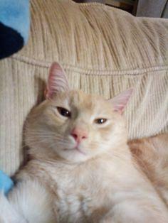 Turek Cat | Pawshake
