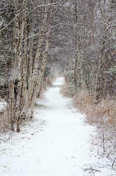 Snow falls on a row of birch trees (betula papyrifera), Jesup Path hiking trail, Acadia National Park, Maine. Maine Winter, Winter Szenen, Winter Love, Winter Walk, Winter Magic, Winter Hiking, Winter Colors, Winter Ideas, Winter White