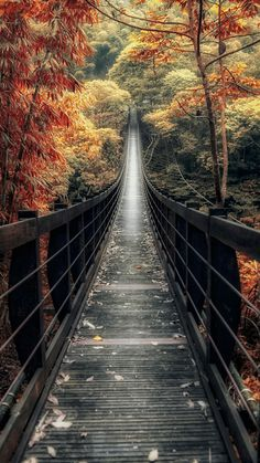 Bridge Walkway with Fall Trees from Zedge