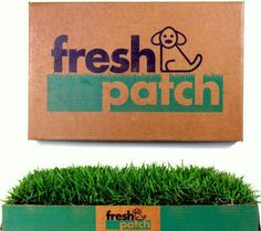 Fresh Patch Disposable Dog Potty with REAL Grass - As Seen on SHARK TANK Fresh Patch http://www.amazon.com/dp/B005G7S6UI/ref=cm_sw_r_pi_dp_vXZ2vb1FVG296