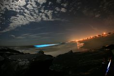 Red Tide - The most common bioluminescent creatures are speck-sized, plant-like dinoflagellates whose blooms cause so-called red tides. They flash brilliant blue to scare off predators when they're disturbed or caught in a wave.  See some of these creatures in action.  Image: catalano82/flickr.