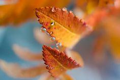 wallpaper images leaf