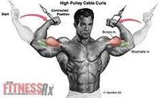 Resultado de imagen de Cable high biceps curls