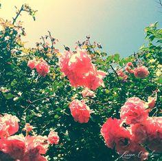 the prettiest spring blooms + clear blue skies #flowers