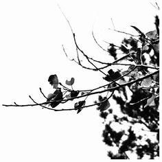 Framartinicampanarosuonitusuonitusuonalecampanesuonalecampanedindondandindondan  #Etna #sicily #phtime