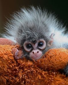 So freaking cute! I love monkeys