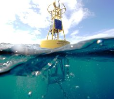 Five marine monitoring buoys will collect high-quality data for researchers studying climate change in the Caribbean Sea, including the waters of Barbados, Belize, The Dominican Republic and Trinidad & Tobago. Coral Reef Ecosystem, Coral Bleaching, Weather Data, Water Quality, Caribbean Sea, Great Barrier Reef, Pacific Ocean, Belize, Trinidad