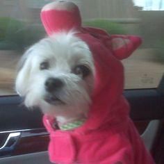 What a cute pup!