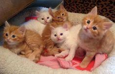 The Jazz Kittens
