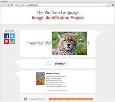 Give the Wolfram Language Image Identify Project a picture, and it uses the language's ImageIdentify function to identify it
