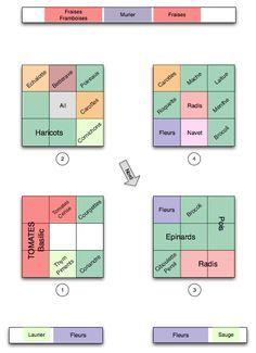 Planification ation et rotation des cultures au potager en carrés