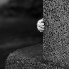 Cat hand | black and white #photography
