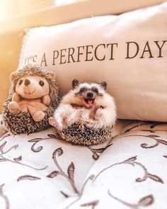 Dec 2019 - About little hedgehog and his life✨. See more ideas about Cute hedgehog, Hedgehog and Cute animals. Cute Little Animals, Cute Funny Animals, Cute Dogs, Funny Cats, Happy Hedgehog, Cute Hedgehog, Cute Animal Photos, Cute Pictures, Pygmy Hedgehog