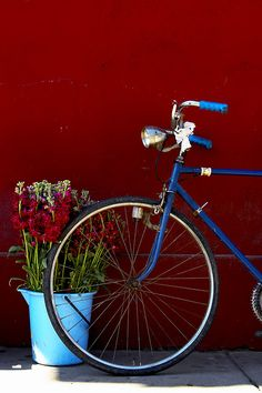 Bicycle and flowers by renatocorteschile, via Flickr