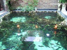 Afbeeldingsresultaten voor Indoor Koi Pond Ideas