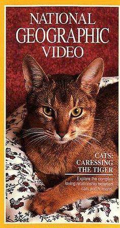 Cats: Caressing the Tiger (TV Movie 1991)         - IMDb