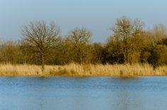 Pond / rybník Nature Photos, Pond, Abstract, Artwork, Summary, Water Pond, Work Of Art, Auguste Rodin Artwork, Artworks
