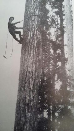 John Harold  Jesta climbin', choppin' and restin' a bithttps://www.facebook.com/photo.php?fbid=10204428038080437