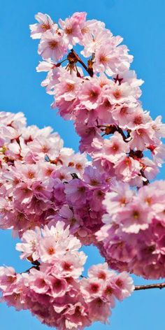 Pink Spring Flowers | Shes a Fox Inspiration