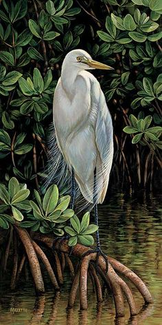 Egret by Rosemary Millette