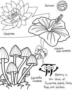 6 botany organic chemistryextra creditbotanycoloring bookscience - Chemistry Coloring Book