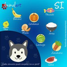 ¿Cuáles alimentos puedo compartir con mi perro   mascotas  alimentos   perros Shih f93b3eca0dc