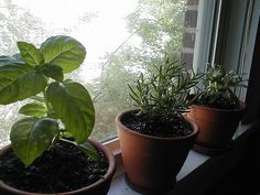 How to Grow an Herb Garden Indoors Year Round