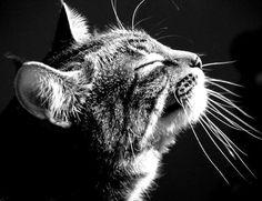 chat noir et blanc                                                                                                                                                                                 Plus