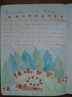 5th grade homeschool botany block